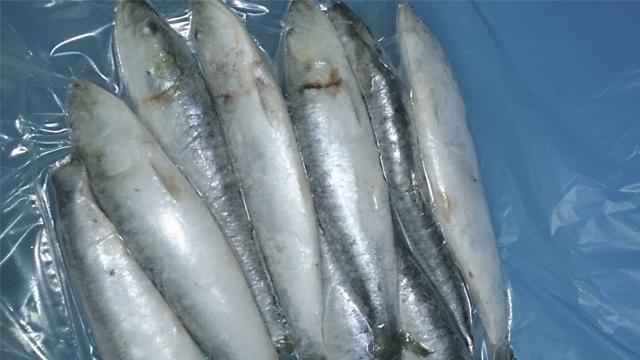 pescapisa_sardina_iqf4